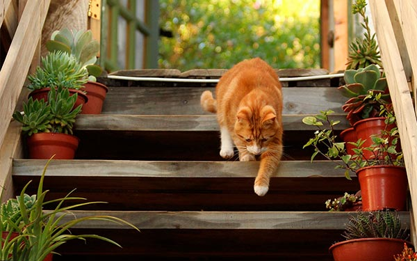 orange cat on woodstairs with plant pots composition tip using color