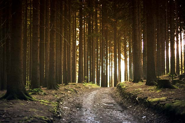 photo of forest trees truck vertical lines ray of sun horizon