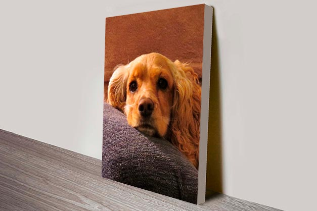 stretched canvas print of dog
